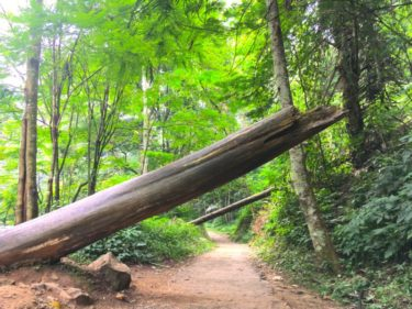 【インドネシアで森林浴】日本人に縁がある森林公園でお散歩